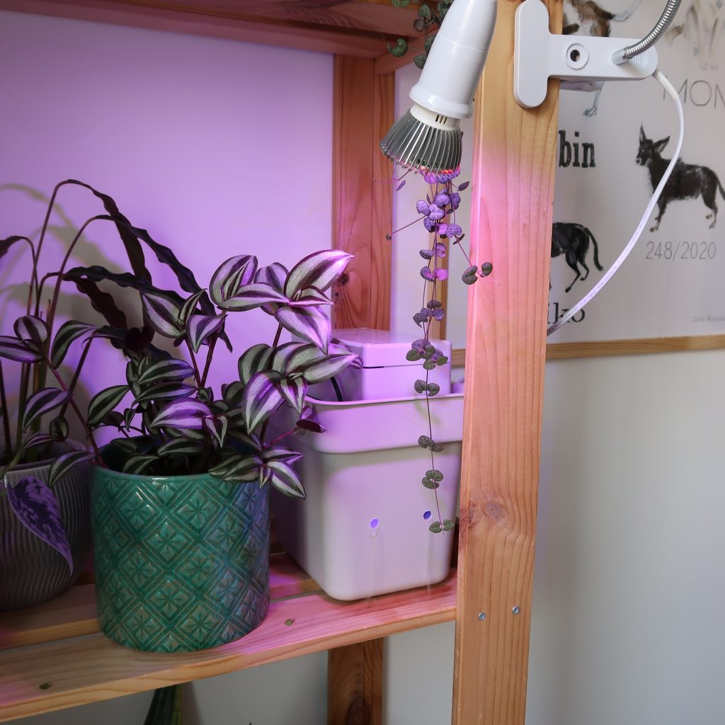 Budżetowy smart nawilżacz powietrza z lampką do roślin